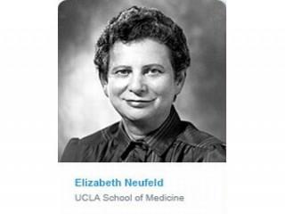 Elizabeth F. Neufeld picture, image, poster