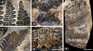 China\'s 298-Million-year-old fossilized forest showcased in great photos