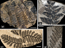 China\'s 298-Million-year-old fossilized forest showcased in great photos biography